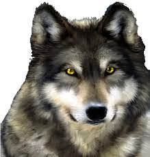 Wolf, Stalker, Predator, Wolves, Attacker